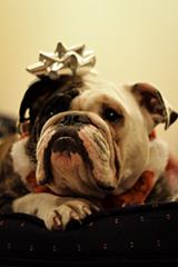 Dog Breeds A-Z: #2 B