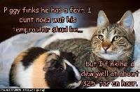 animal crazy postcards