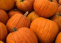 Pumpkin season! (USA)