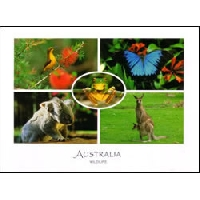 WPS - Animal Postcard #2