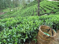Tea from your country