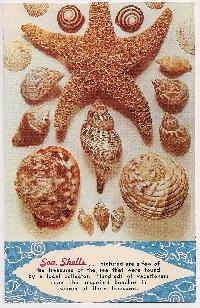 Sea creature postcard