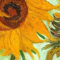 Sunflower madness! USA