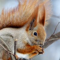 Squirrel Postcard Swap #6