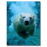 Simple Animal Postcard Swap