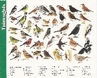 Bird Postcard Swap