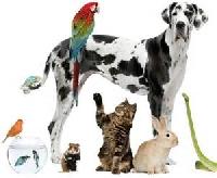 Pets Pocket Letter