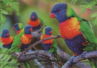 Beautiful Birds PC Swap