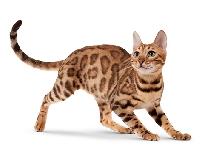 Meowgust Cat Postcard Swap (USA)