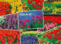 PTG: Multiview Postcard - Just Flowers