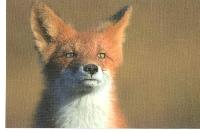 PH: Animal Postcards #2