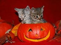 Halloween Card and Flat Surprise (USA)