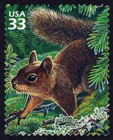 Squirrel Appreciation Day Happy Mail