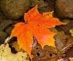Autumn Skeins