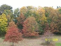 Autumn Time Photo Swap