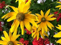 junk journal supplies - flowers